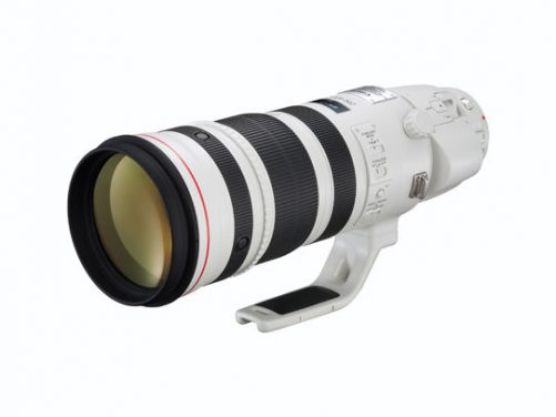 The Ultimate Wildlife Lens – Canon 200-400 F4 L IS USM EXTENDER 1.4×