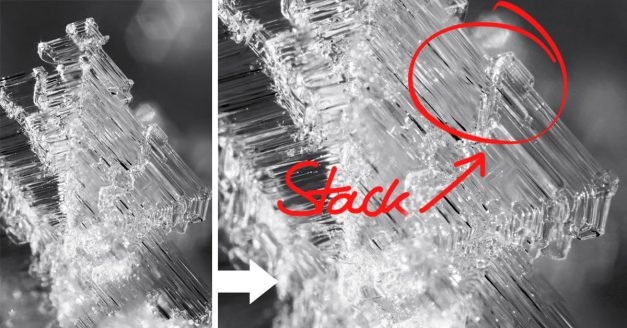 Behind the Shot: The Tip of a Snowflake