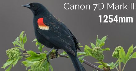 Canon 7D Mark 2 at 1254mm – You Won't Believe This!