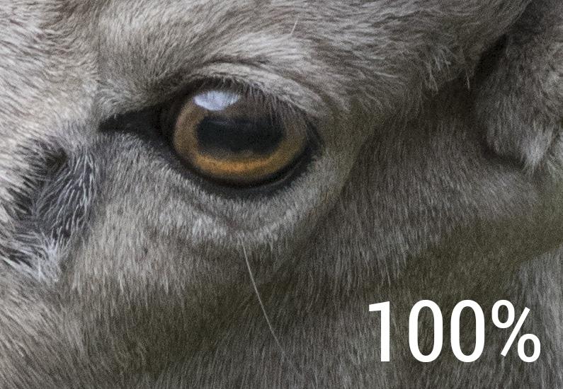 100-400-crop1