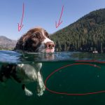 Behind the Shot: Just Keep Swimming