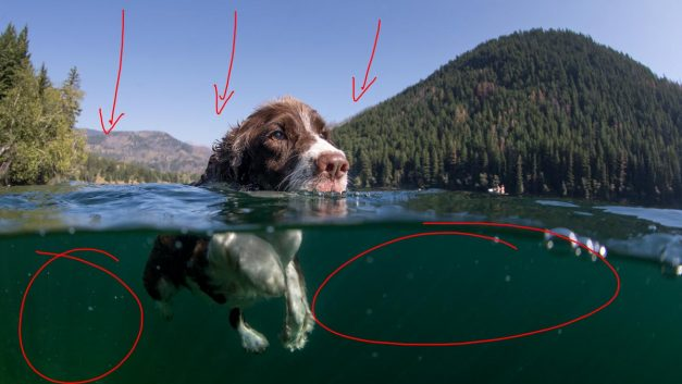 Behind the Shot: Just Keep Swimming