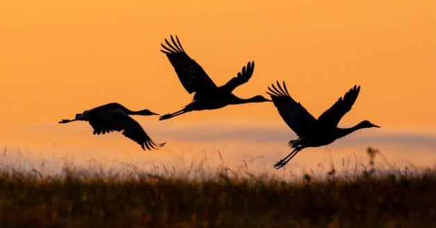Behind the Shot: Fire Crane Flight