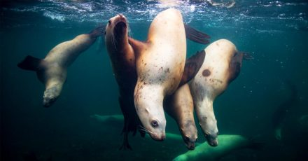 Packing List: Underwater Sea Lion Photography On Hornby Island